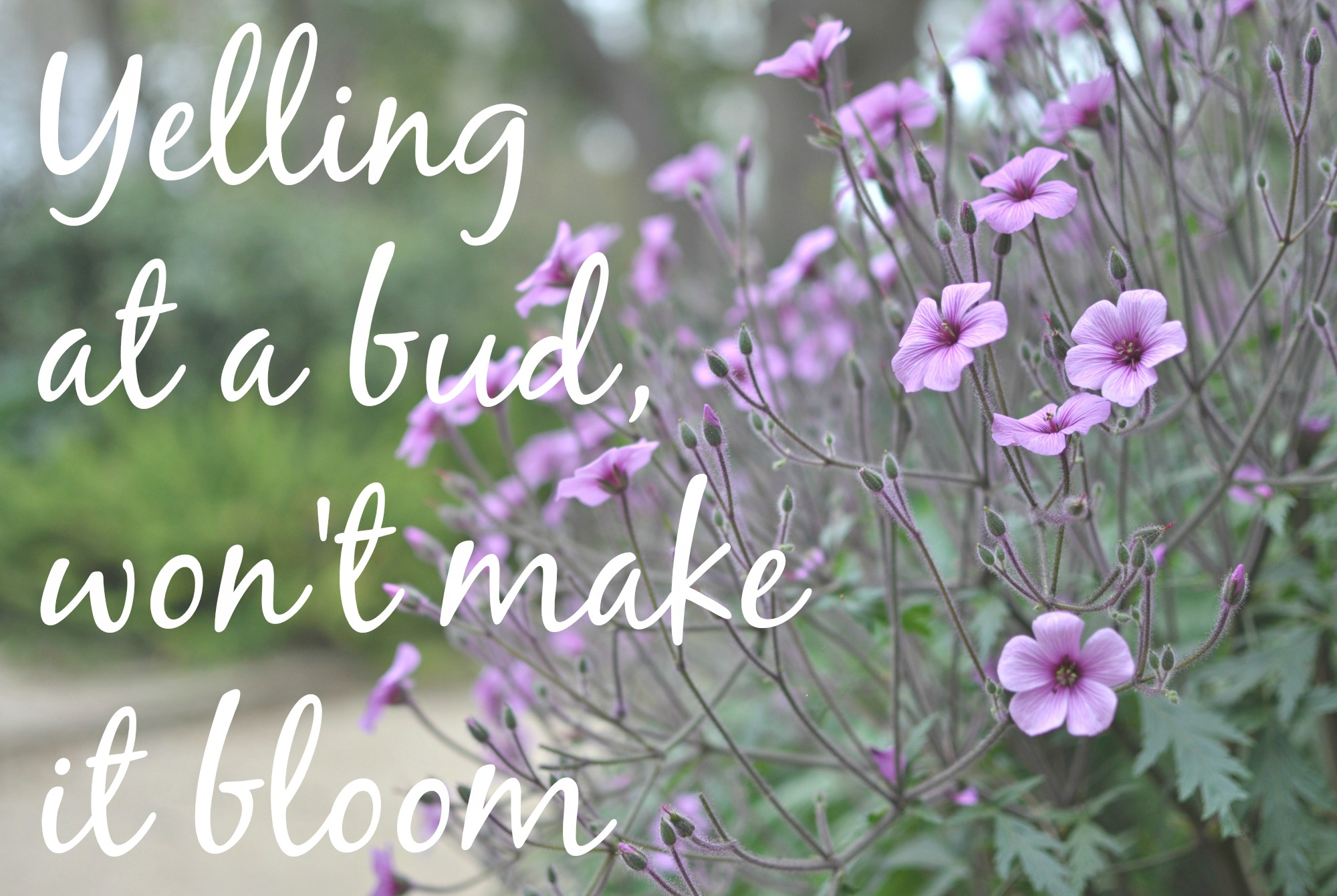Bloom Quotes Bloom Quote  Momistabeginnings